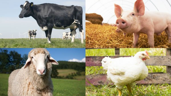 Animal and livestock waste and by-products disposal and treatment